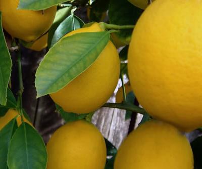 20 Unique Uses for Lemons