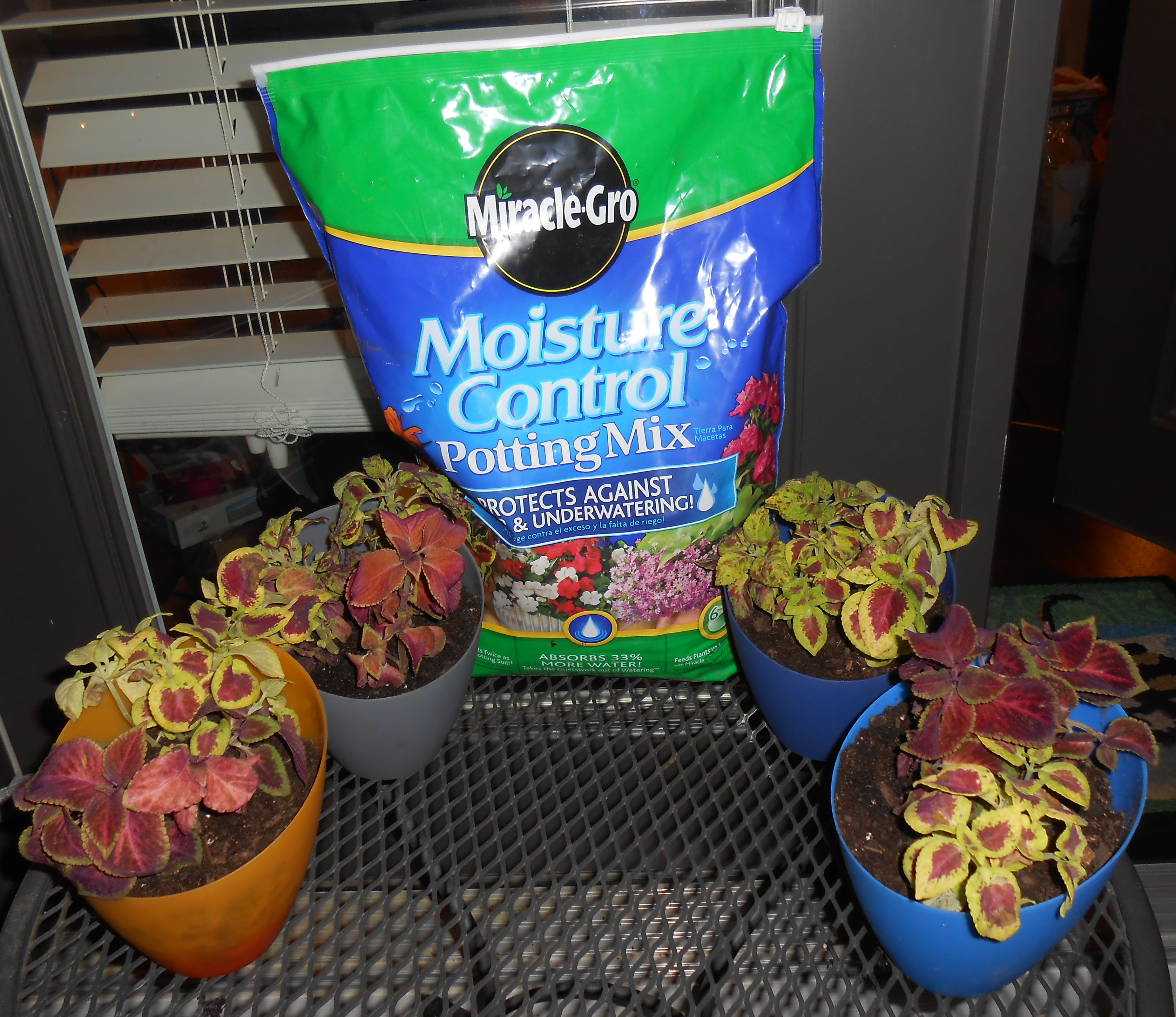 DIY Lamp Shade Container Gardening Ideas: Miracle Gro's The Gro Project