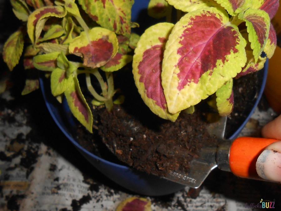 add soil container gardening ideas