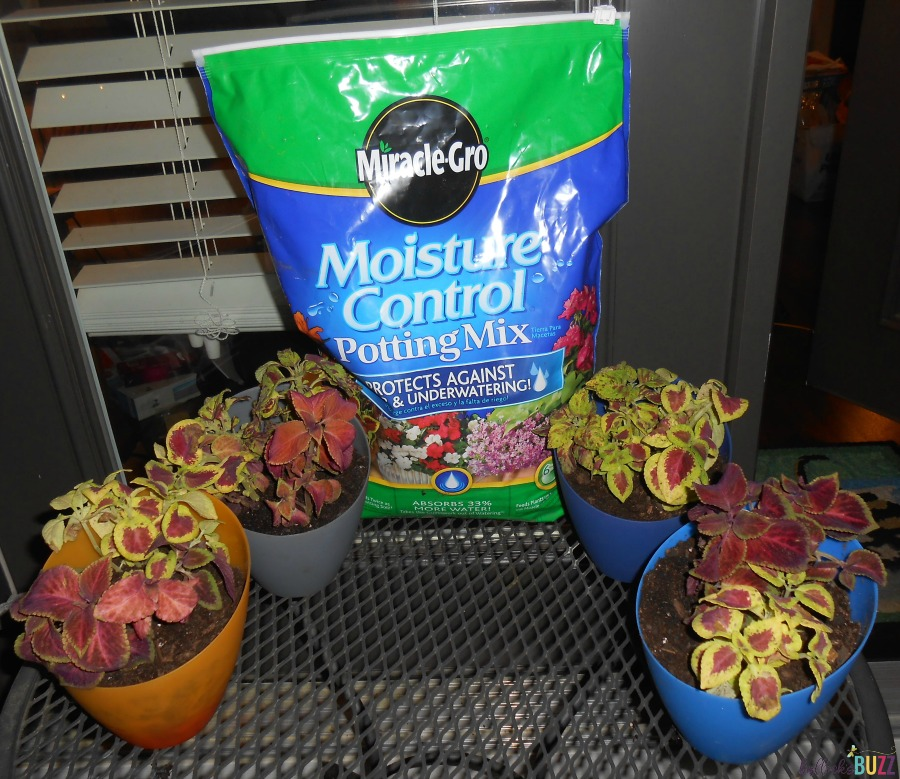 Miracle-Gro-The-Gro-Project container gardening