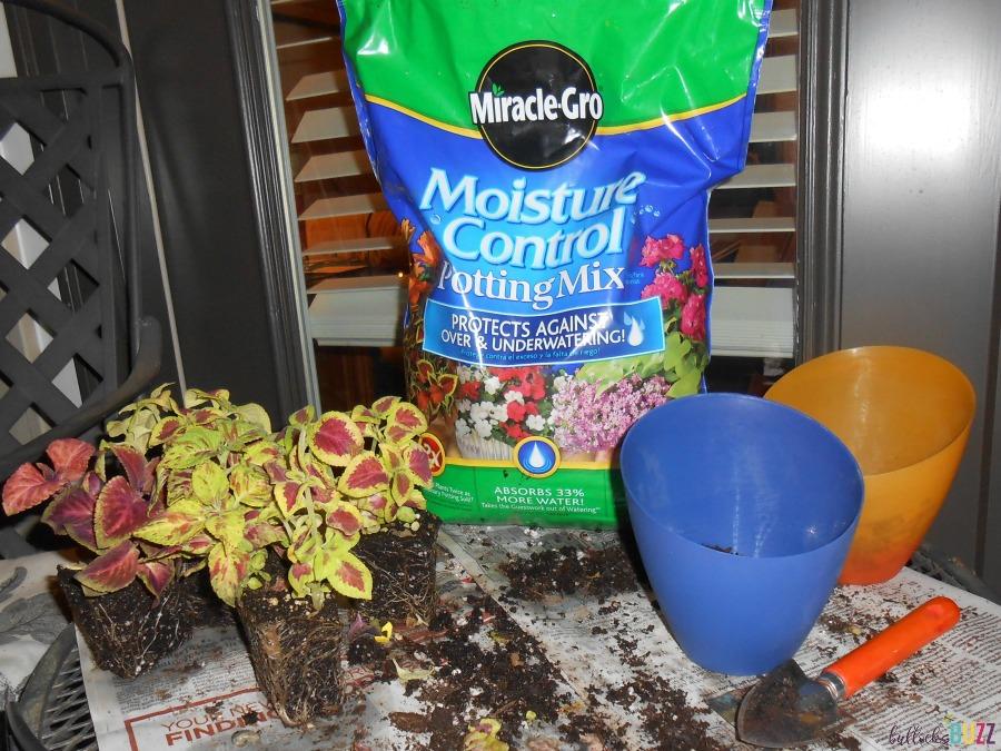 container gardening-supplies