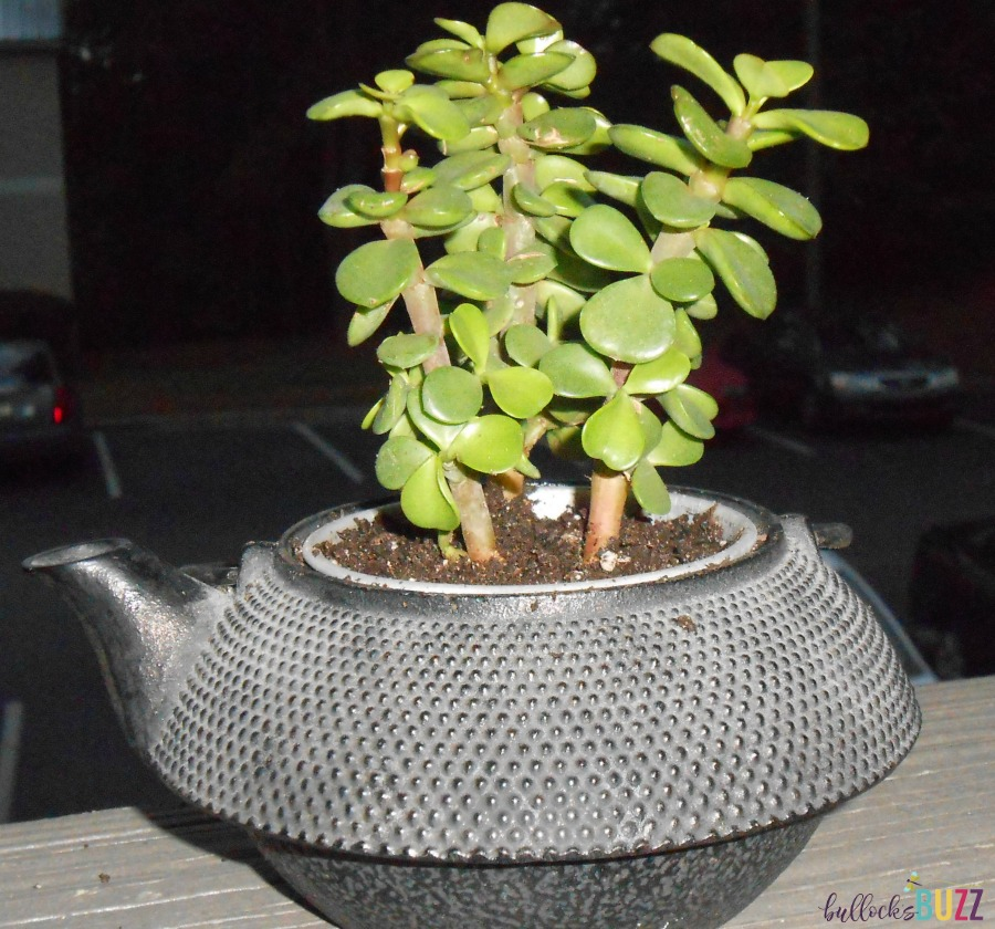 container gardening ideas upcycled-teapot-planter