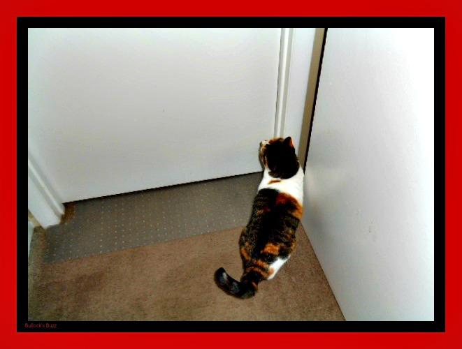 Cat Carpet Scratch Stopper
