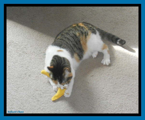PetBox Review5 Sookie Playing with Toy