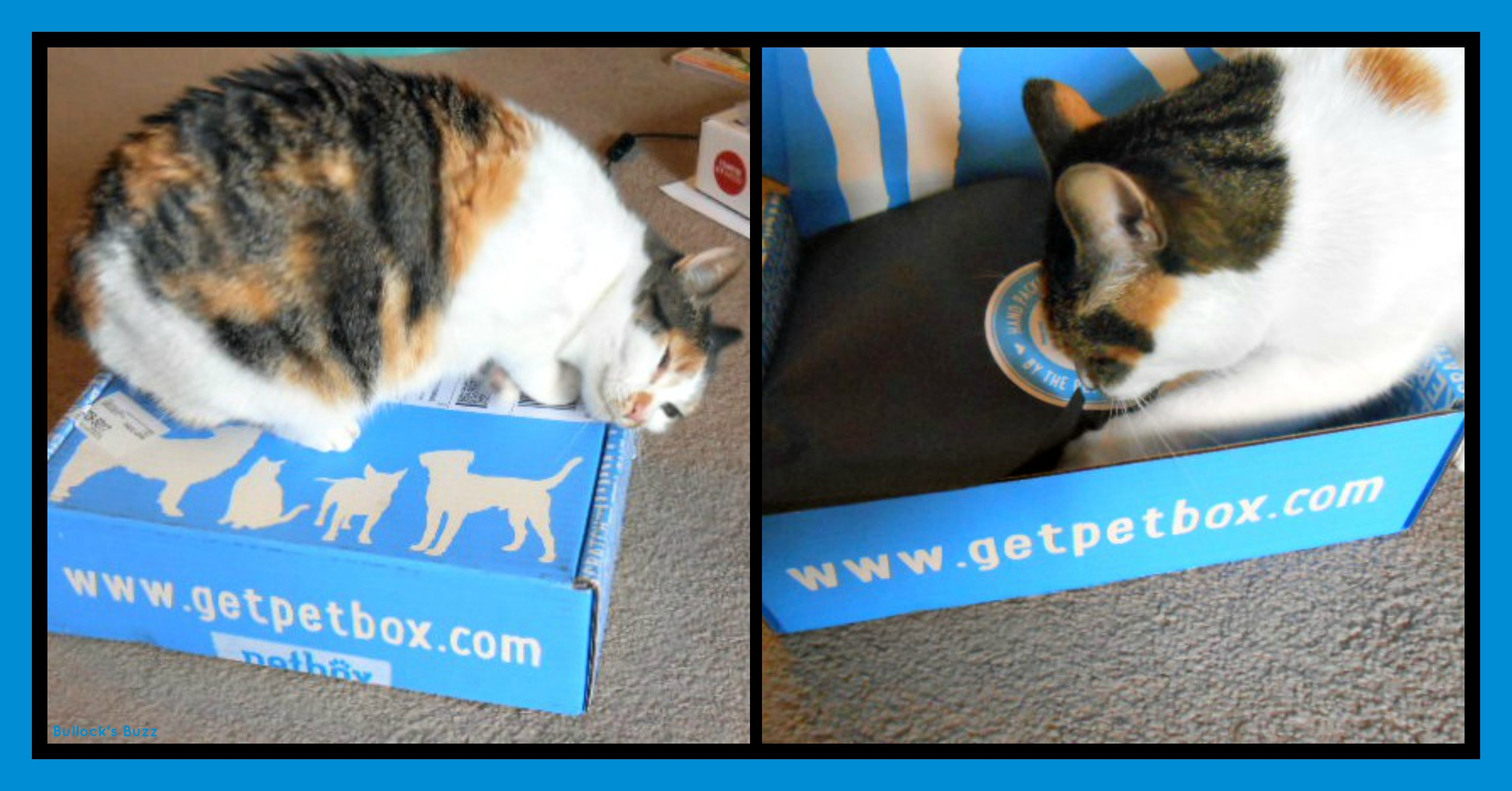 PetBox Review7 Cat on top of Box