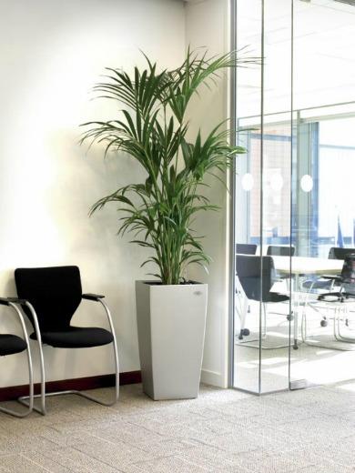 indoor-plants1a