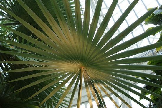 indoor-plants5