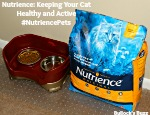 Nutrience: Keeping Your Cat Healthy and Active #NutriencePets