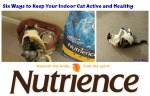 Six Ways to Keep Your Indoor Cat Active and Healthy #NutriencePets