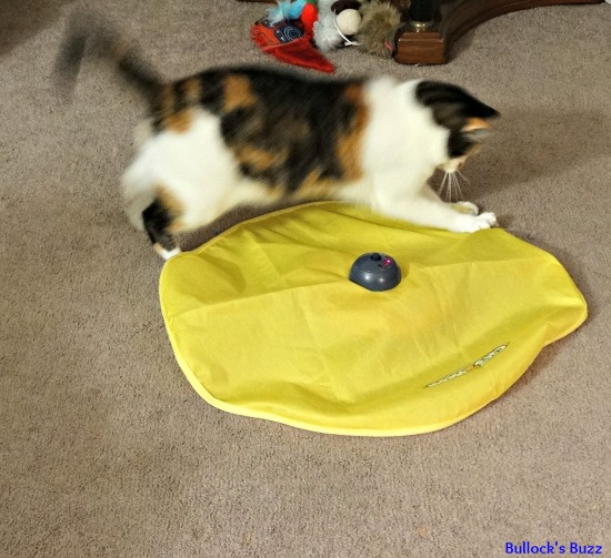 Six Ways To Keep Your Indoor Cat Active And Healthy