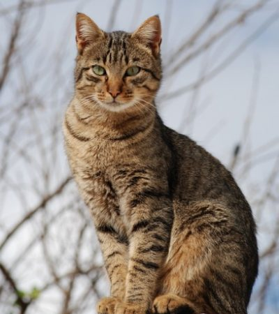 9 Fantastic Tips for Keeping Your Cat in Good Health