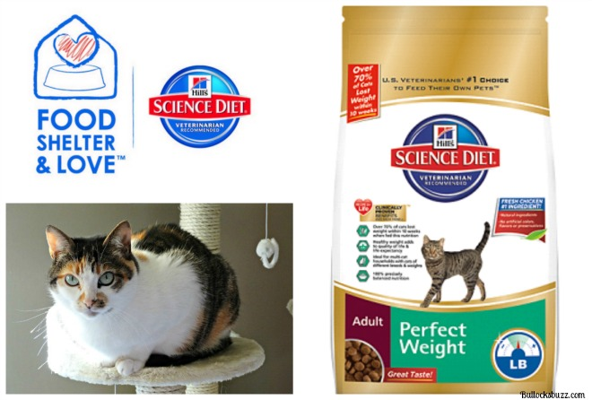 Hill's – Helping Make Shelter Cats Healthier and More Adoptable #FoodShelterLove