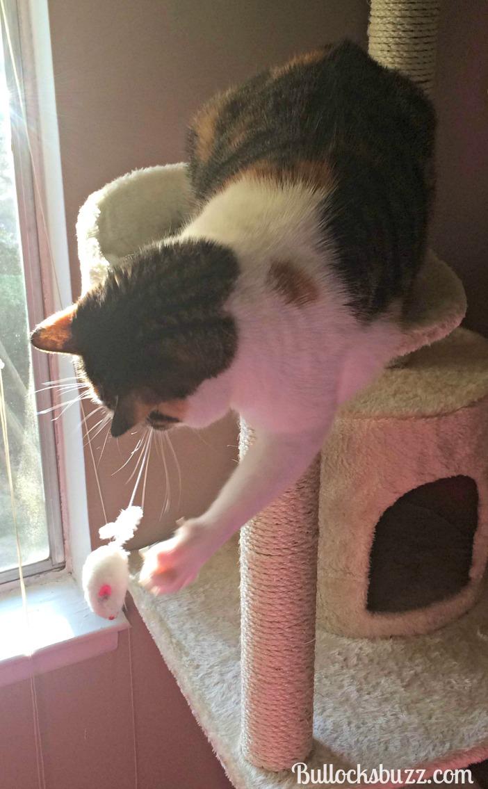 cozy cat condo mouse toy