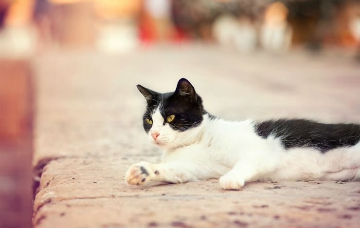7 Summer Safety Tips For Pets cat