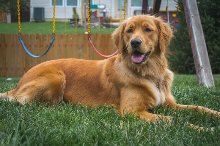 7 Summer Safety Tips For Pets dog