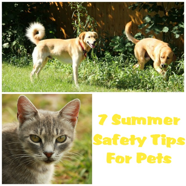 7 Summer Safety Tips For Pets featured image