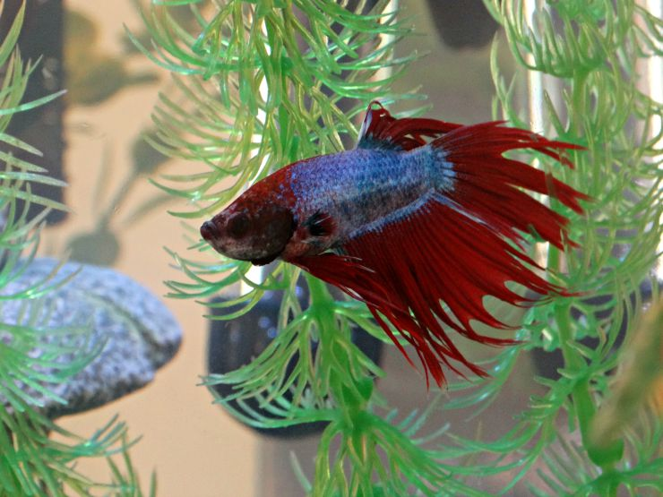 Why Fish Makes Great First Pets Image 1