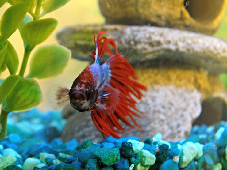 Why Fish Makes Great First Pets Image 2