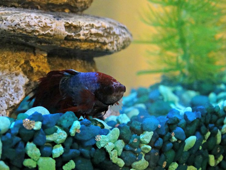 Why Fish Makes Great First Pets Image 4