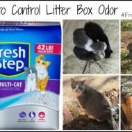 6 Ways to Control Litter Box Odor #FreshStepFebreze