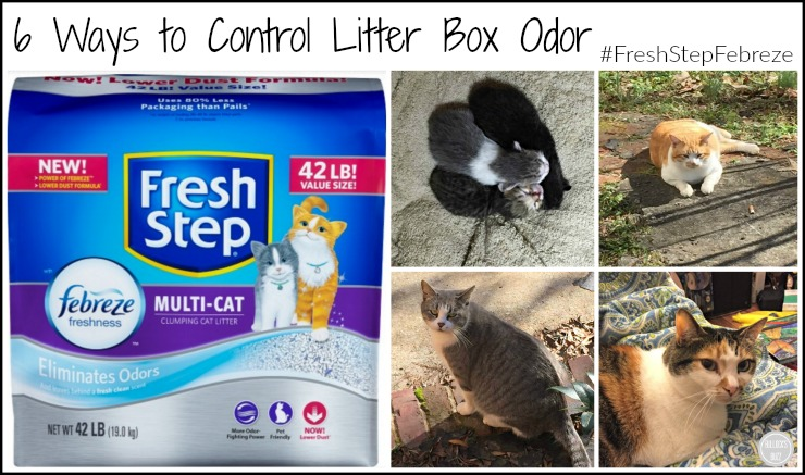 ways to curb littering Yes, it takes a daily effort on your part to keep litter box odors at bay but the result will be a happier cat and a better-smelling home.