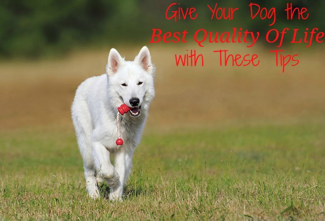 Give Your Dog The Best Quality Of Life With These Tips