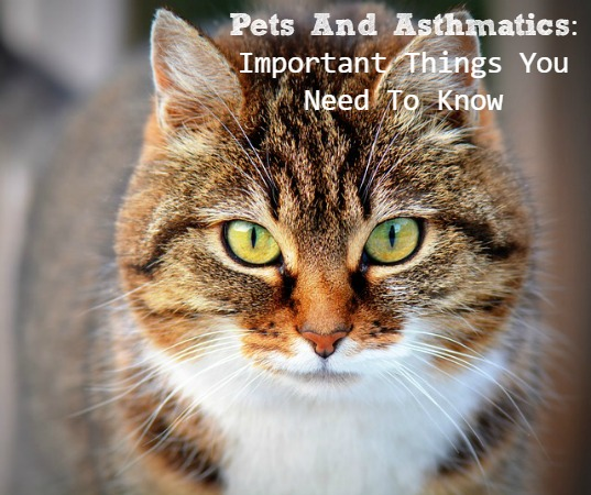 Pets And Asthmatics: Important Things You Need To Know