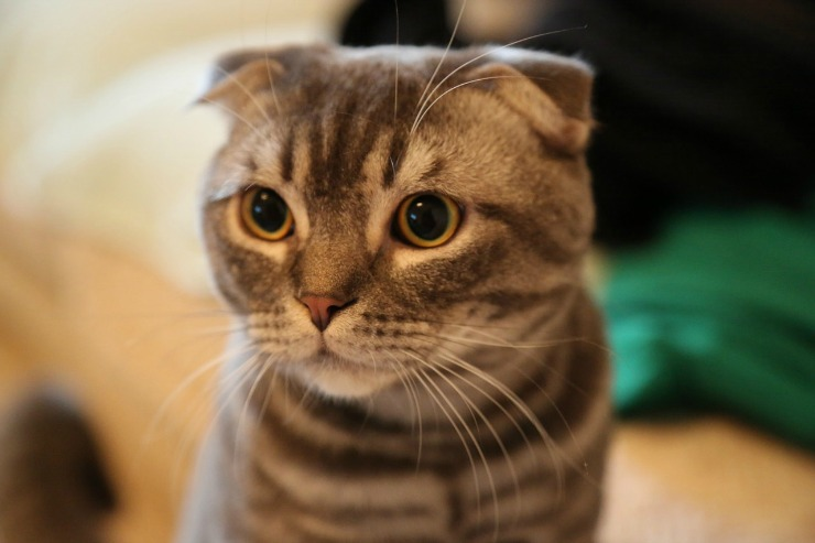 common health issues in cats image 2
