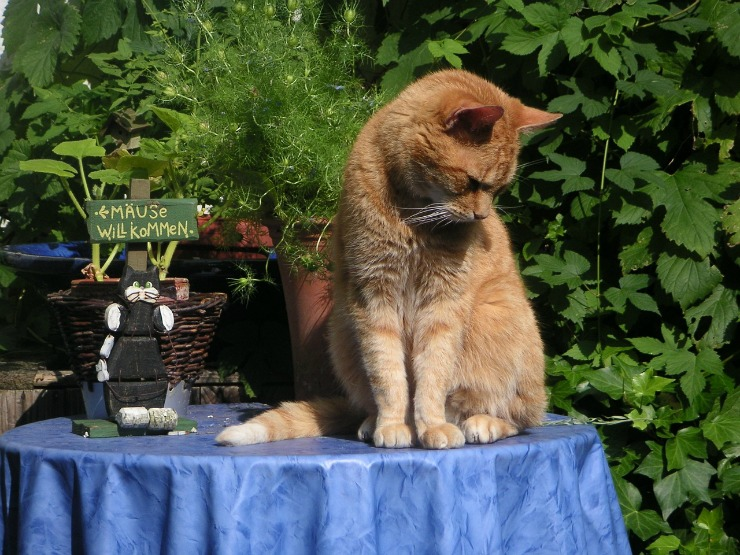 common health issues in cats image 3