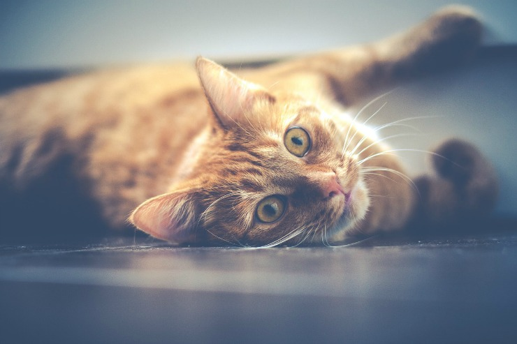 common health issues in cats image 4