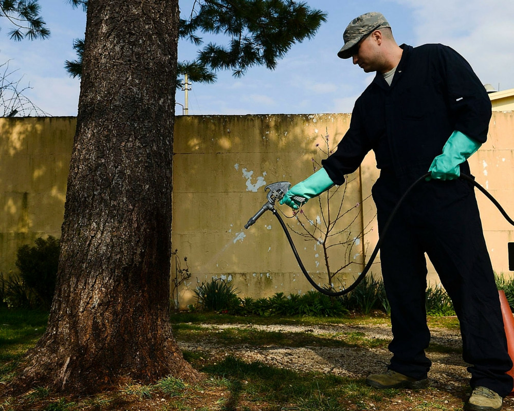 More Humane Ways To Deal With Pest Control main image