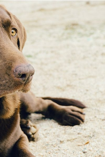5 Things You Must Do If You Own A Dog