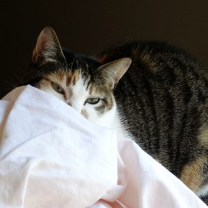 June is Adopt-a-Shelter-Cat Month! You Can Help Along With Cat's Pride + Vera Bradley Giveaway