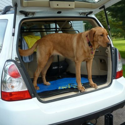 Driving with Pets: 4 Ways to Keep Your Furry Friends Safe