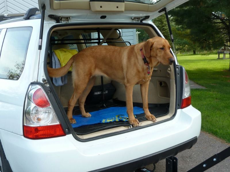 driving with pets keeping them safe main
