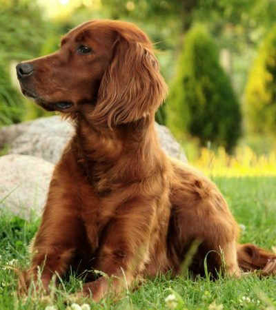 For The Love Of Dogs – The Ups and Downs Of Dog Ownership