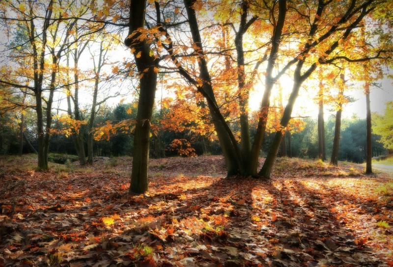 transform-your-garden-this-fall-main