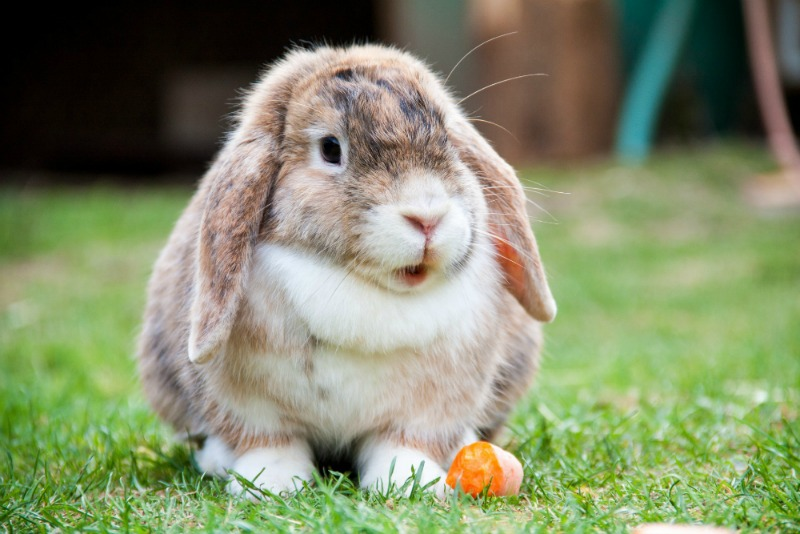 unique-pets-bunny