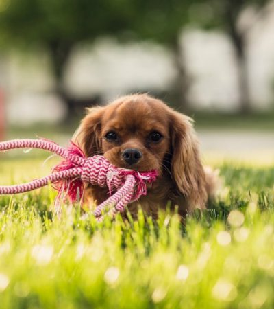 Getting A Pet: Ex-puurrrr-nsive Costs You Can't Afford To Forget