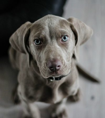 Are You Ready For Owning A Dog? Ask These Questions First!