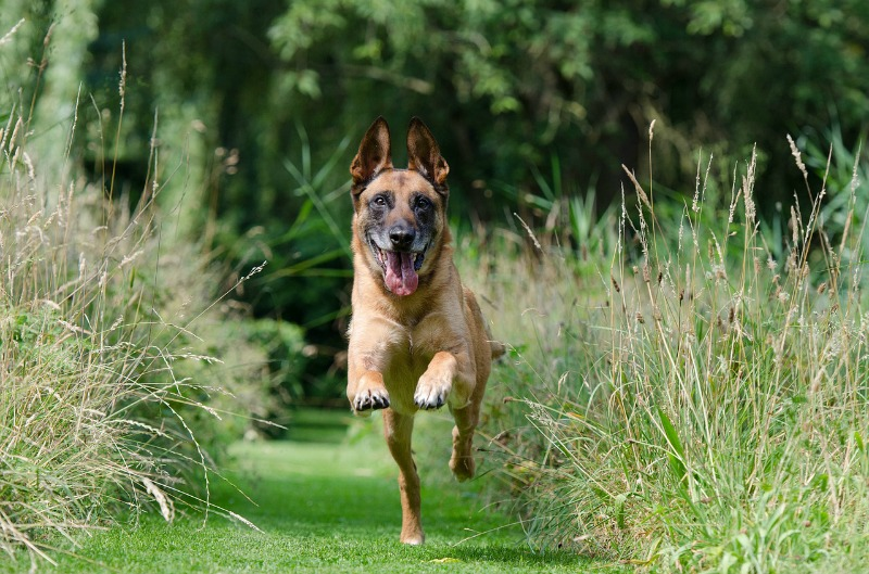 Mistakes Dog Owners Make healthy dog