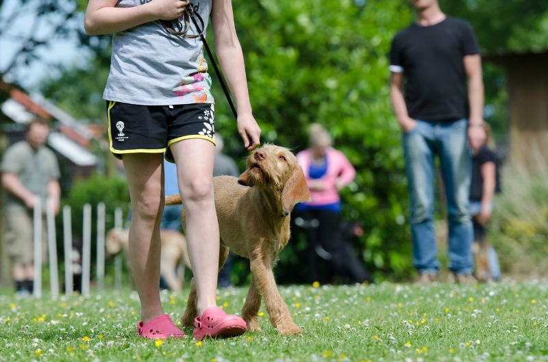 Mistakes Dog Owners Make training