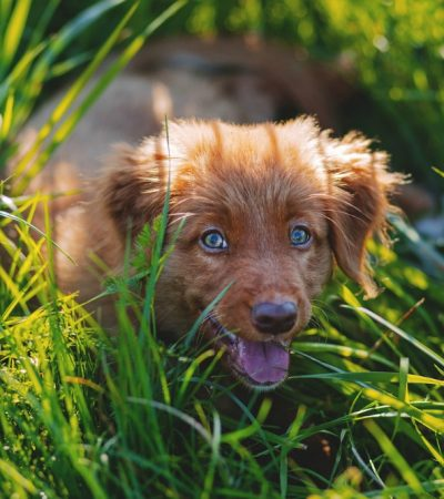 Pet Peeve: How You Can Overcome Your Fear Of Dogs