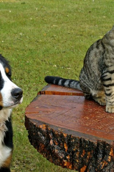 Choosing a Pet – Getting it Right for You and Your Choice of Pet