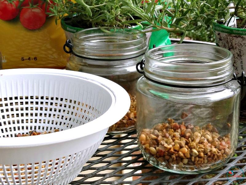 DIY Indoor Hanging Herb Garden add pebbles