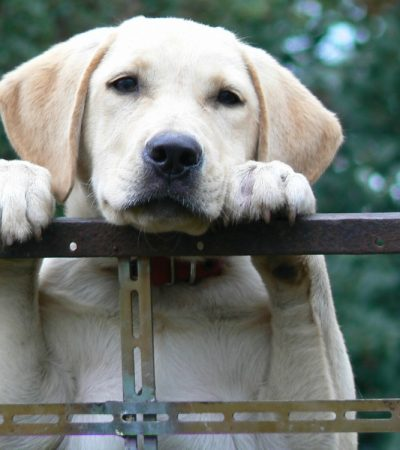 Which Is The Best Dog For Your Family? 4 Family Friendly Dog Breeds