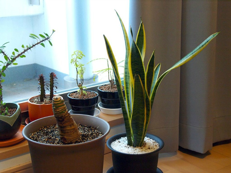 Cut Living Costs add plants