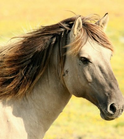 Owning a Horse: Stop Horsing Around!