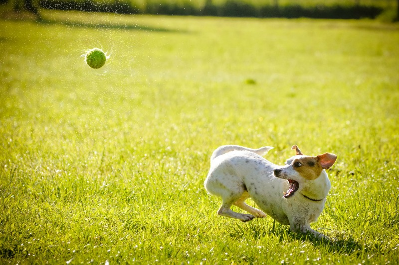 Should You Take Your Dog On Vacation With You playing with ball