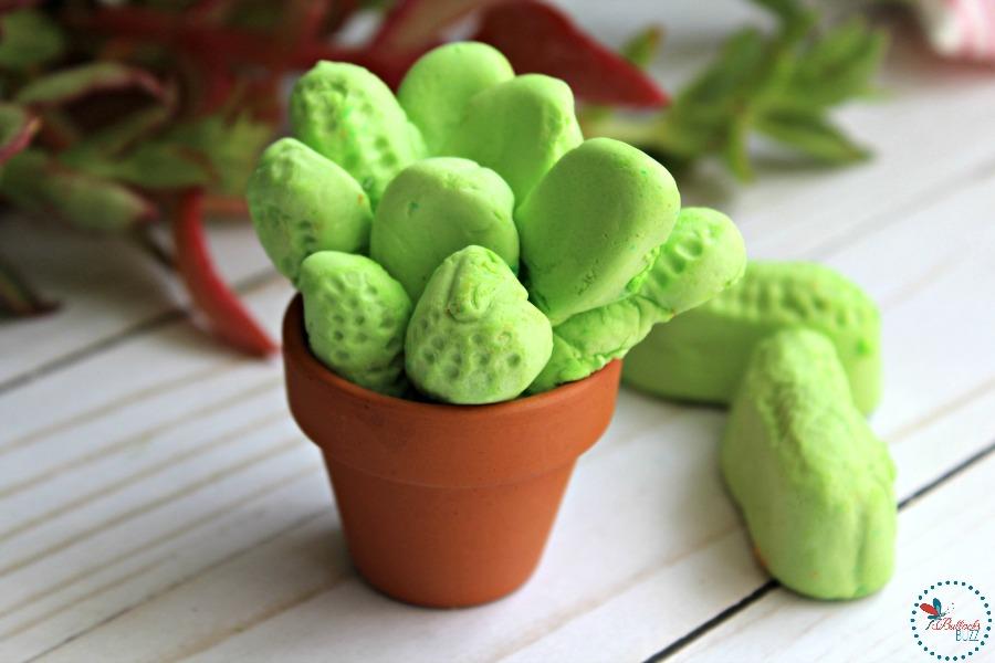 Adorable Edible Succulents